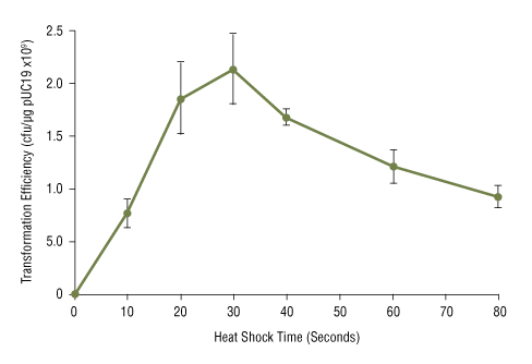 Effect of heat shock time on NEB 5-alpha competent E.coli transformation efficiency: