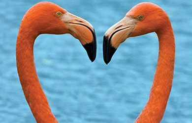 OneTaq_QL_SO_390_0320